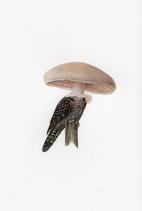 http://thinkspacegallery.com/2008/project/API/show/amyross_owlshroom.jpg