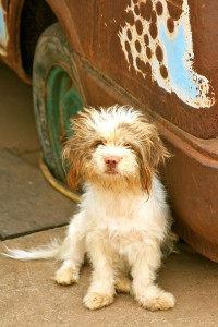 http://thinkspacegallery.com/2010/01/show/laos-fluffy-white-dogsmall.jpg